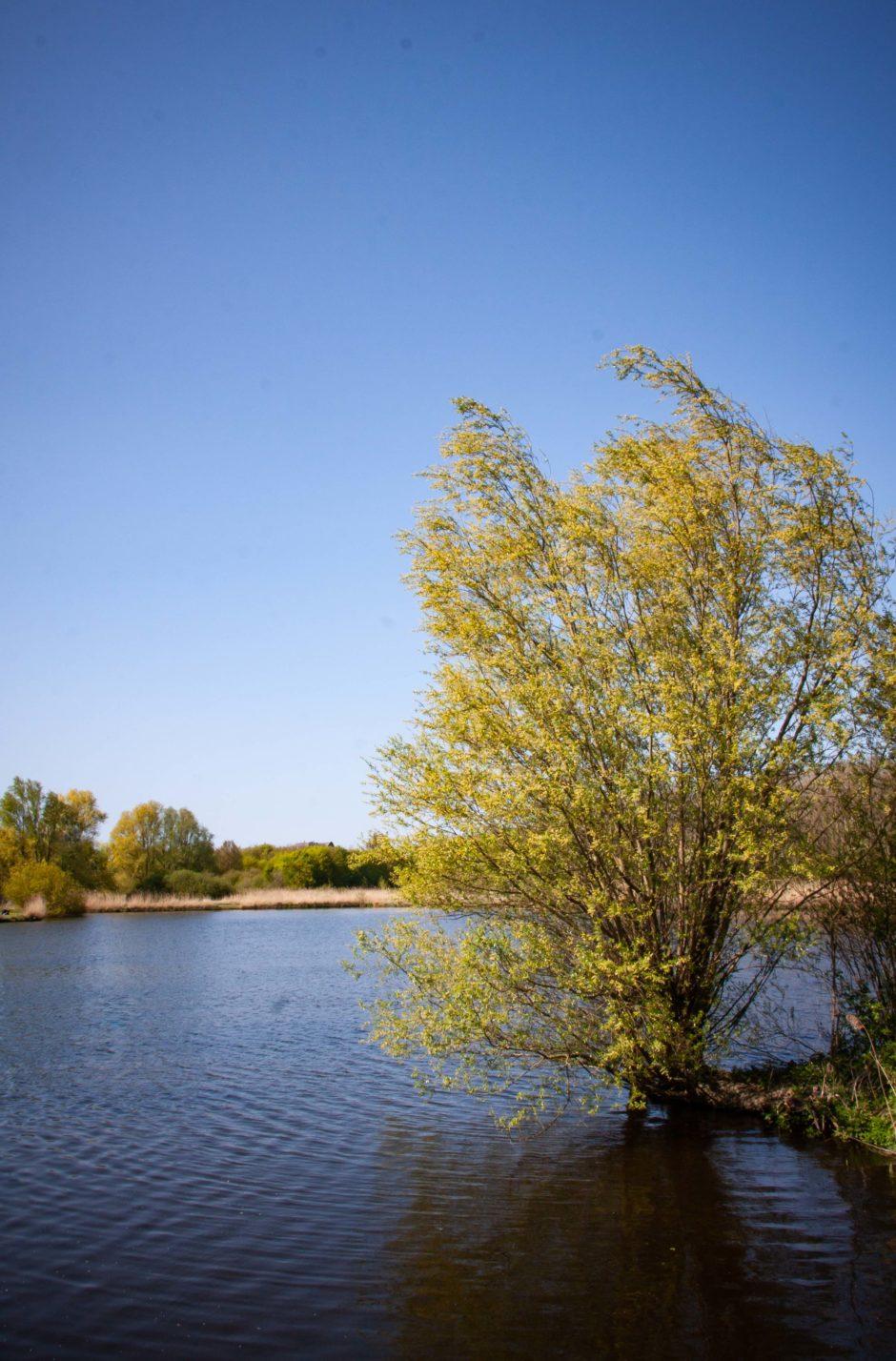Vlietland groen water ruimte