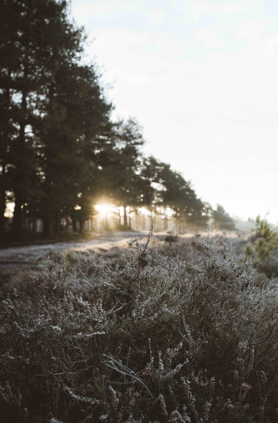 Winter Vlietland
